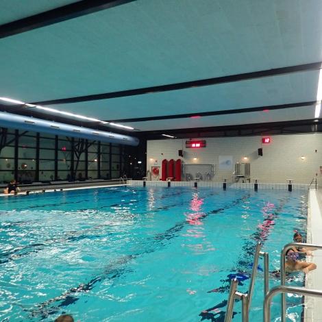 Zwembad in de Reeshof